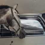 Ifor Williams HBX511 2-paards paardentrailer